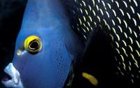 Highlight for Album: Diving Belize