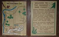 Highlight for Album: Quinalt RainForest